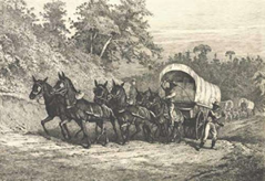 A 6-mule supply wagon